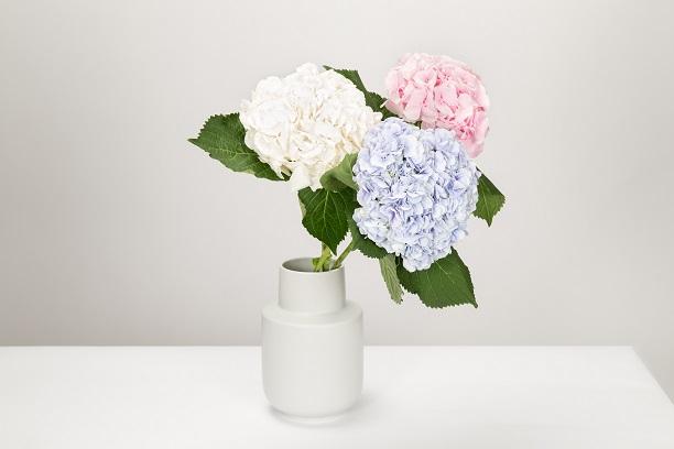 Photo of ۱۰ گل و گلدان فانتزی برای زیباسازی محل کار یا اتاق شما