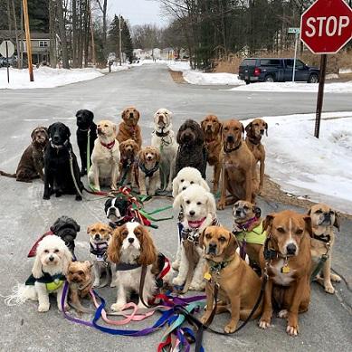 حمایت از سگ های خانگی