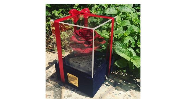 جعبه موزیکال گل ماندگار دکوفیوره مدل رز جاودان ملودی های عاشقانه - به همراه پاکت مخصوص